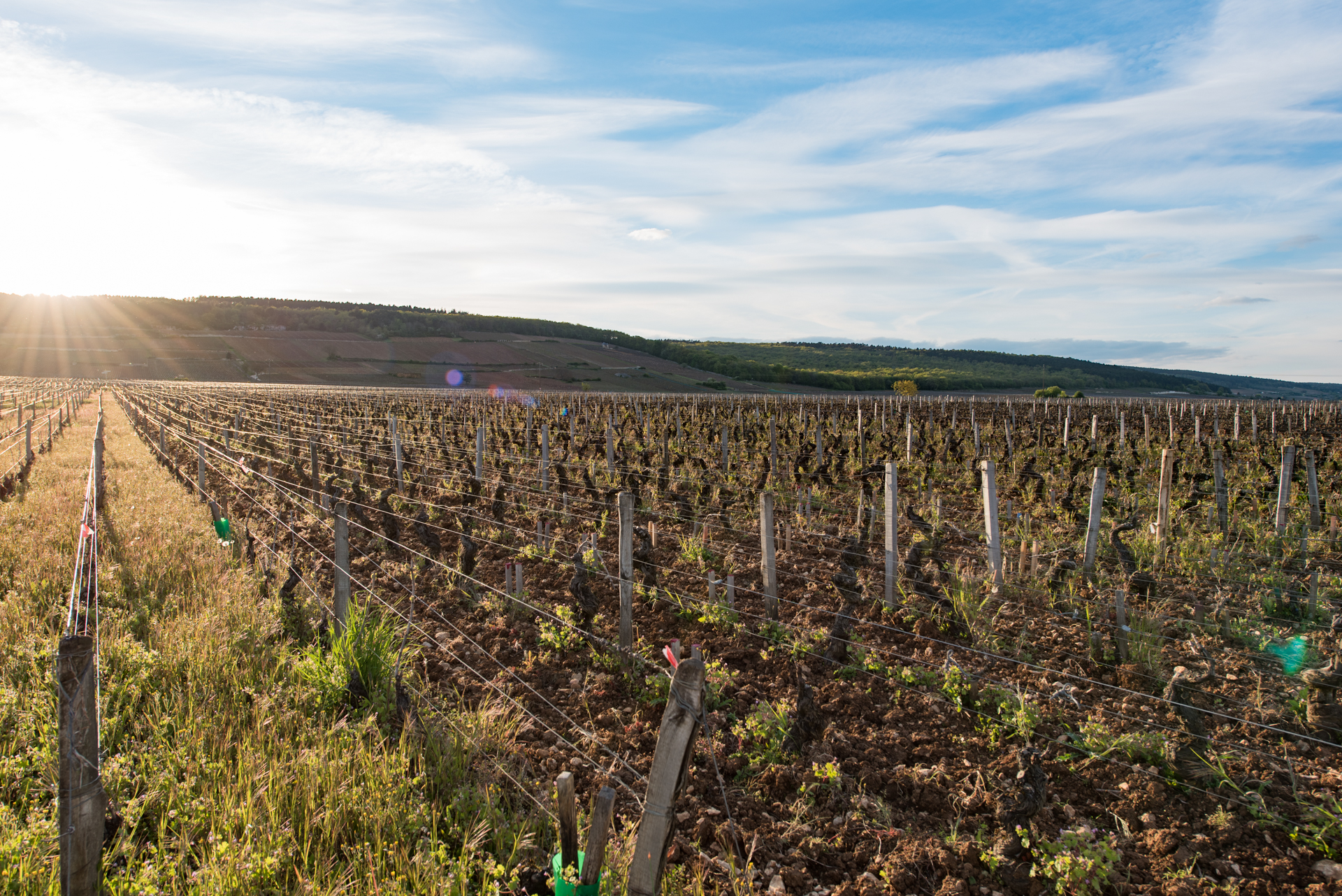 vineyard morey saint denis